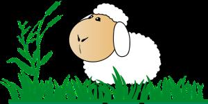 sheepimage2